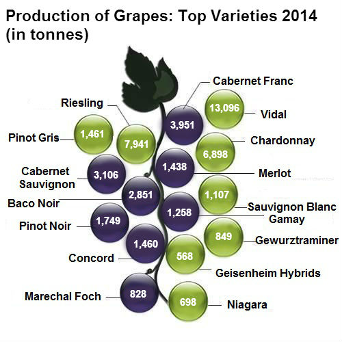 history varieties and production of wine There are 35 grape varieties authorised for the production of quality wine in  austria the percentage of red wine has increased to a about a third in recent  years,.